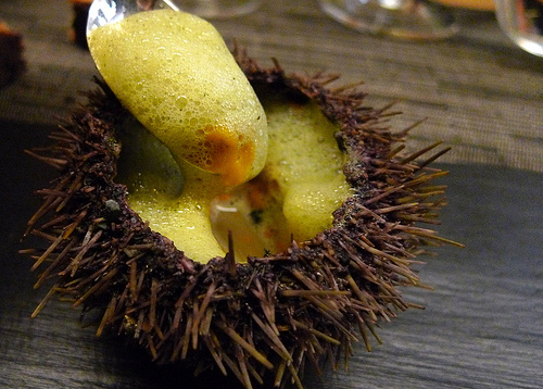 Sea Urchin at Agapé Substance