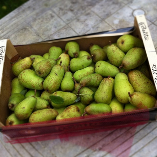 Normandy pears (photo: Jennifer Greco)
