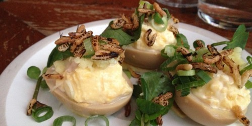 deviled eggs mary celeste photo catherine down
