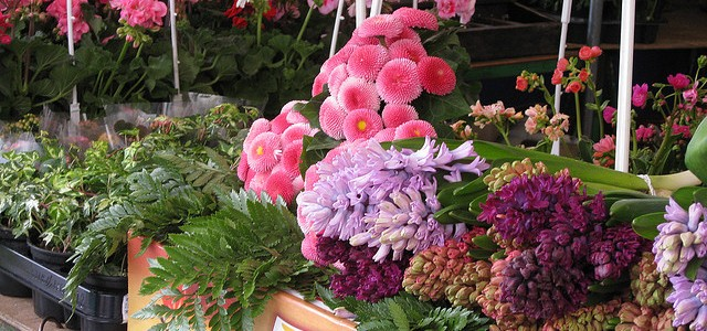 Flowers at the Aligre market