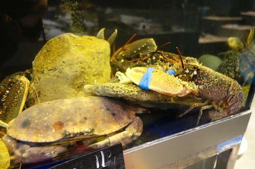 Live crabs and lobsters at Terroirs d'Avenir | Paris By Mouth